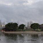Laguna del Parque de la Alhóndiga (Getafe)